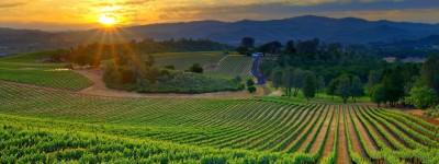 Vineyard sunset 1024x384